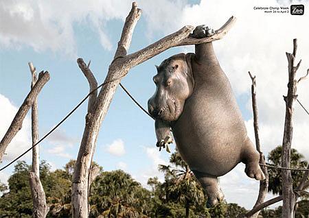动物园可爱动物广告招贴-欣赏-创意在线