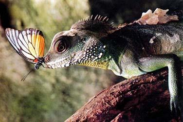 和谐之美--把镜头对准自然界中的生灵万物
