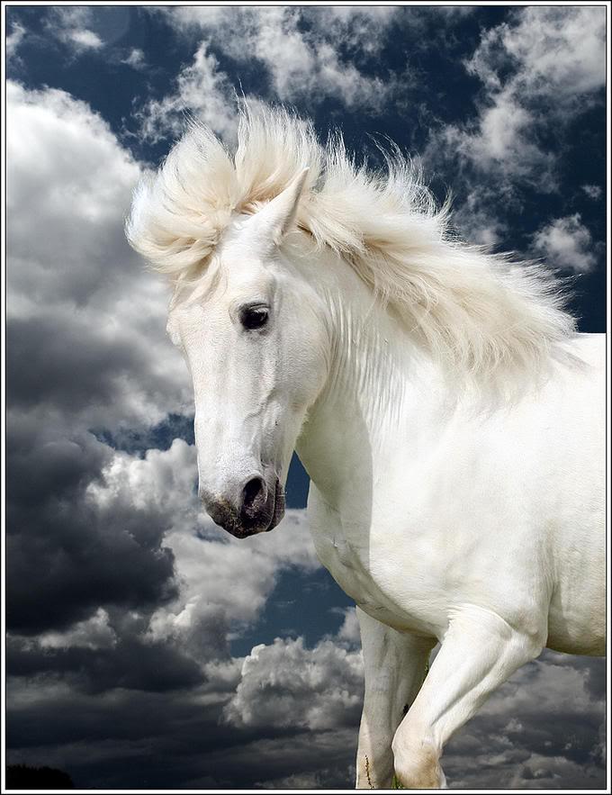 英俊白马-动物摄影
