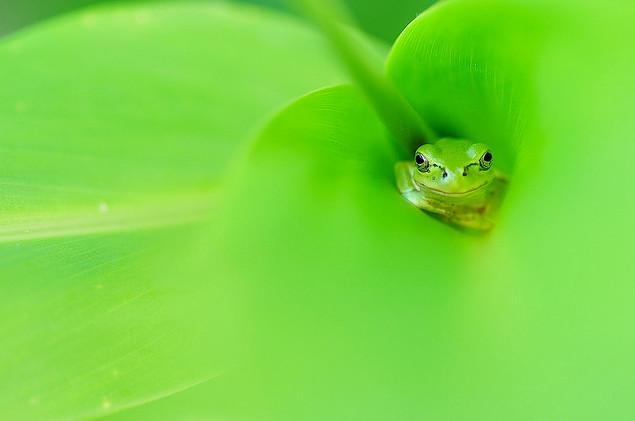 可爱的青蛙摄影欣赏