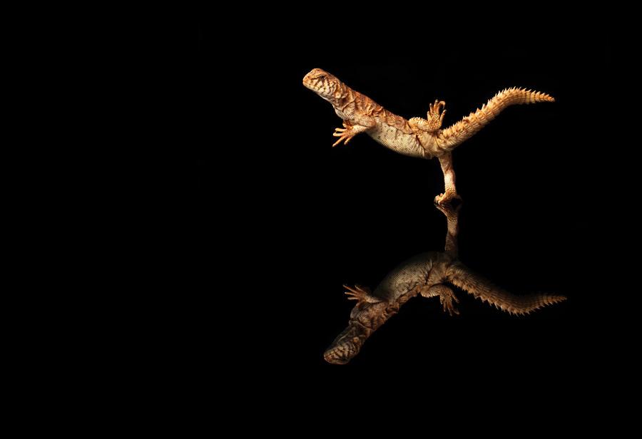 goh动物微距摄影作品