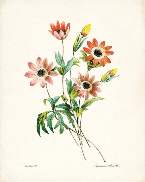 手绘花朵-欣赏-创意在线
